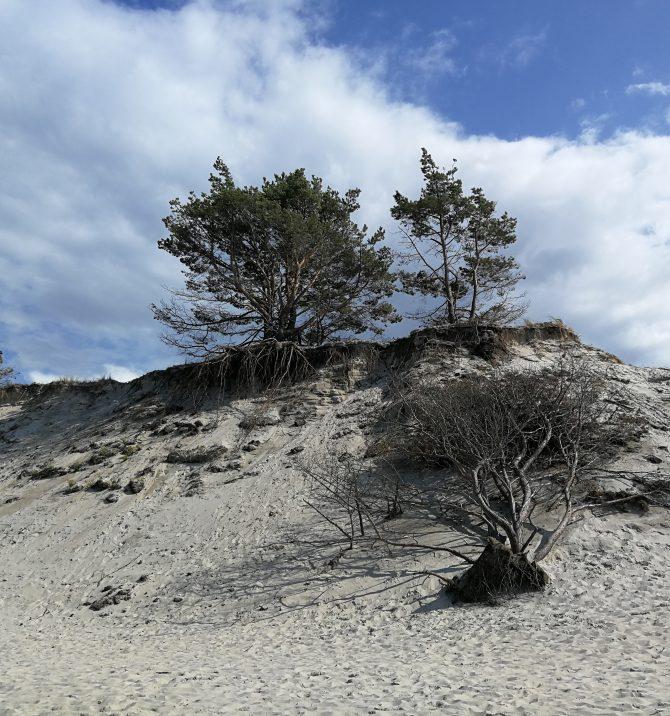 Cisza i wiatr, zieleń i  błękit czyli Wybrzeże Słowińskie