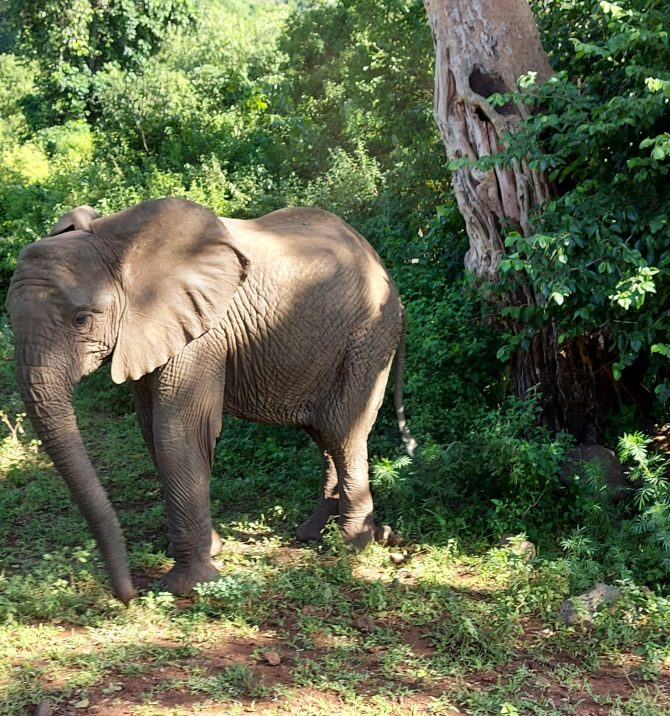 Przytul słonia czyli tanzańskie safari